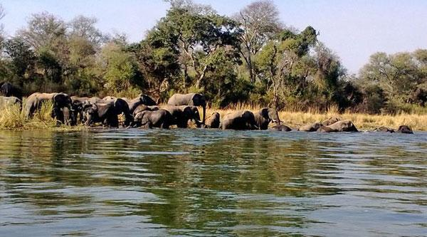Elephants at Mobola Lodge