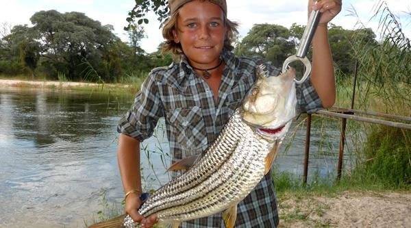 Huge Tiger Fish